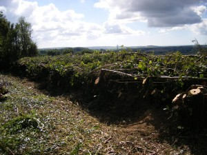 Hedge_laying_2010