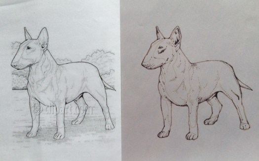 two images of a pit bull: one from the internet with a watermark, one a clean hand-drawing