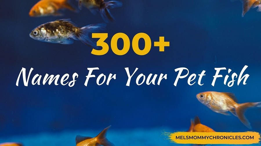 300+ Names For Your Pet Fish