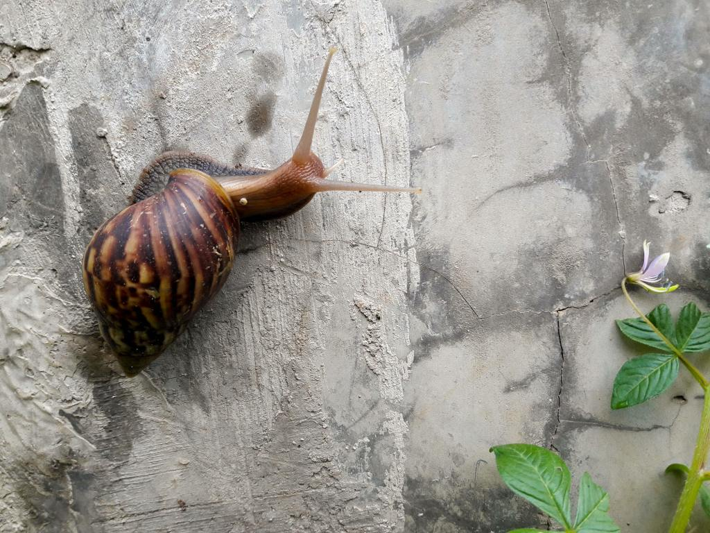 one of a kind pets: Snails