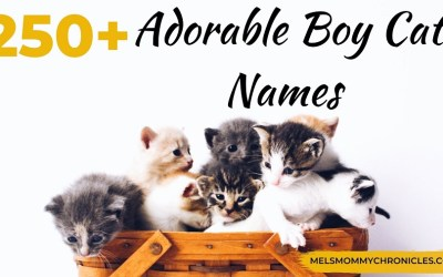 Cutest Male Cat Names: 250+ Adorable Names For Boy Cats!