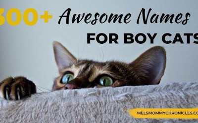 Coolest Boy Cat Names: 300+ Names For Awesome Cats!