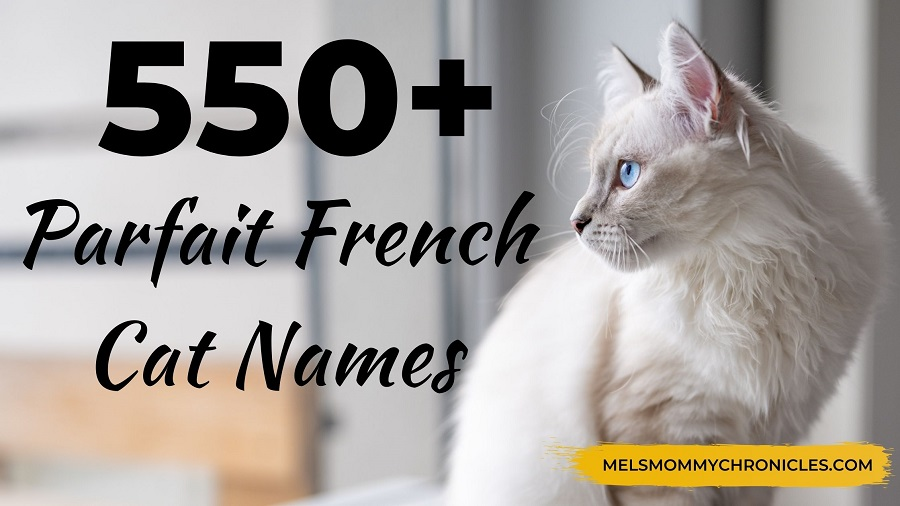 550+ Cute French Cat Names