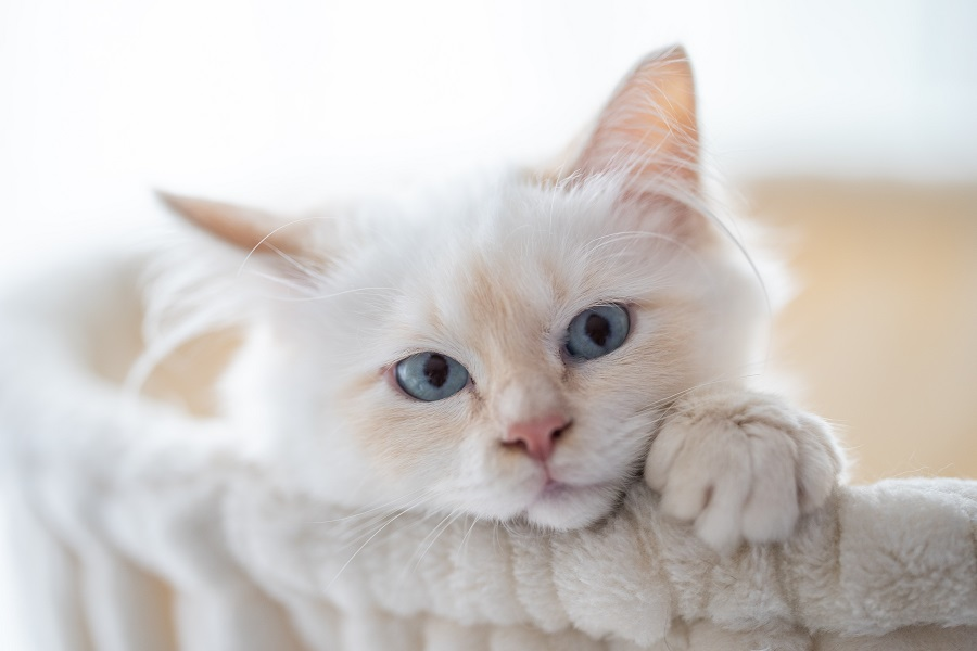 Cat names in French cute