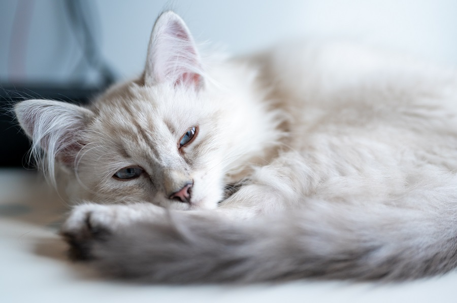 Female French cat names