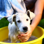 Puppy Care Tips for New Pet Owners