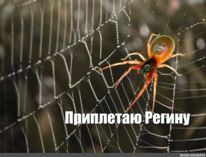 Create Meme Spider Spider A Spider Spinning A Web Pictures