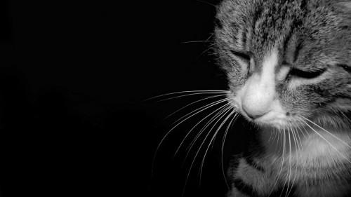 Create Meme Kitty Sad Kitty Sad Black And White Cat Sad Cat