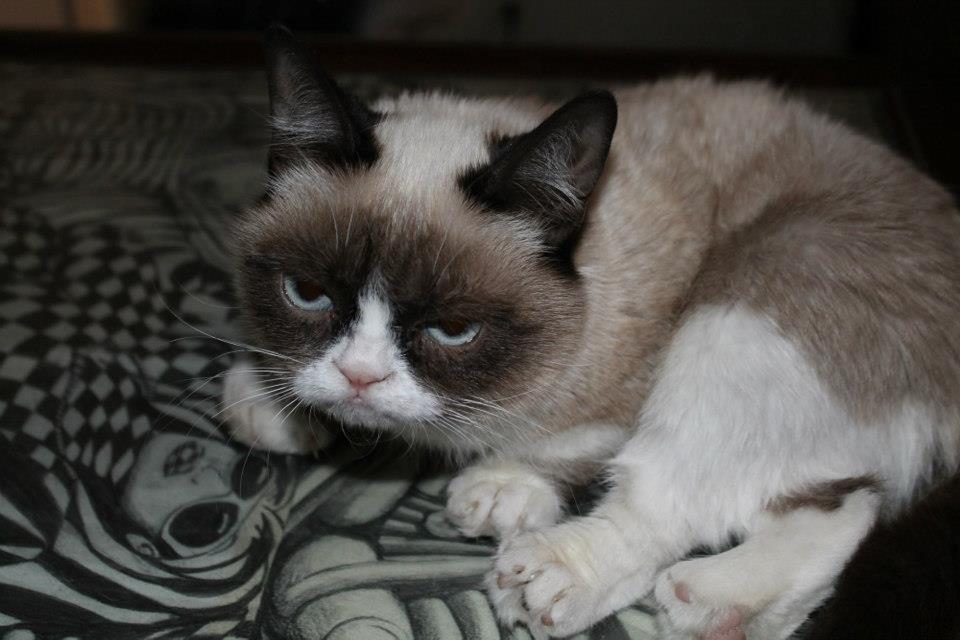 Meme Creator Waking Grumpy Cat Meme Creator