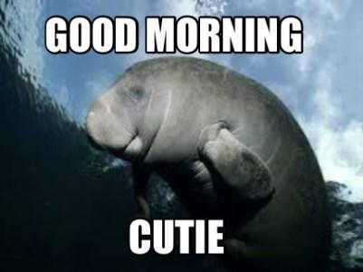 cute animal good morning memes