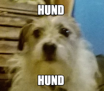Meme Zentimeter Hund 2017 Pfotenpiloten