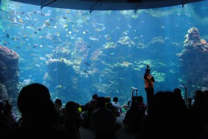 Aquarium Presentation at Cal Academy