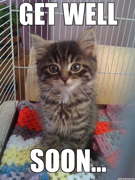 Office Cat Says Feel Better Business Cat Meme Generator