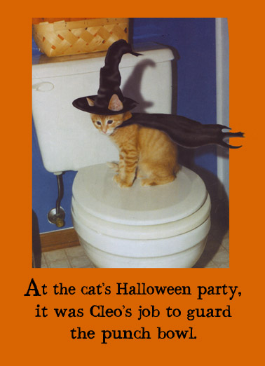 Funny Halloween Cat Memes