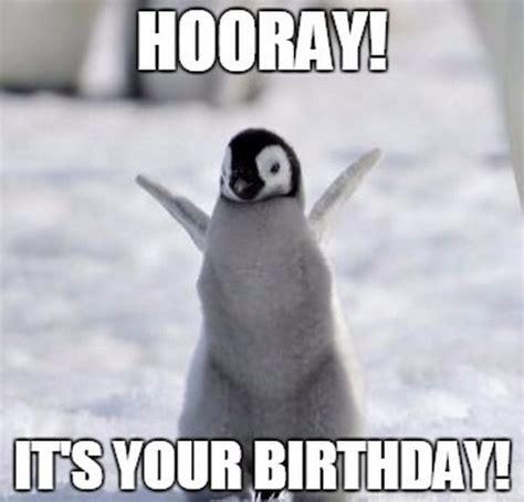 Happy Birthday Penguin Memes