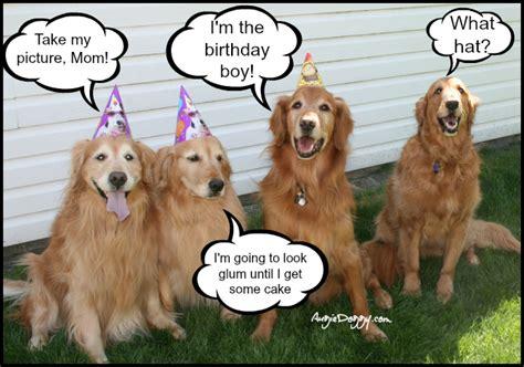 Golden Retriever Birthday Memes