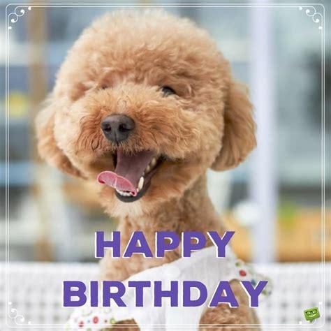 Happy Birthday Poodle Memes