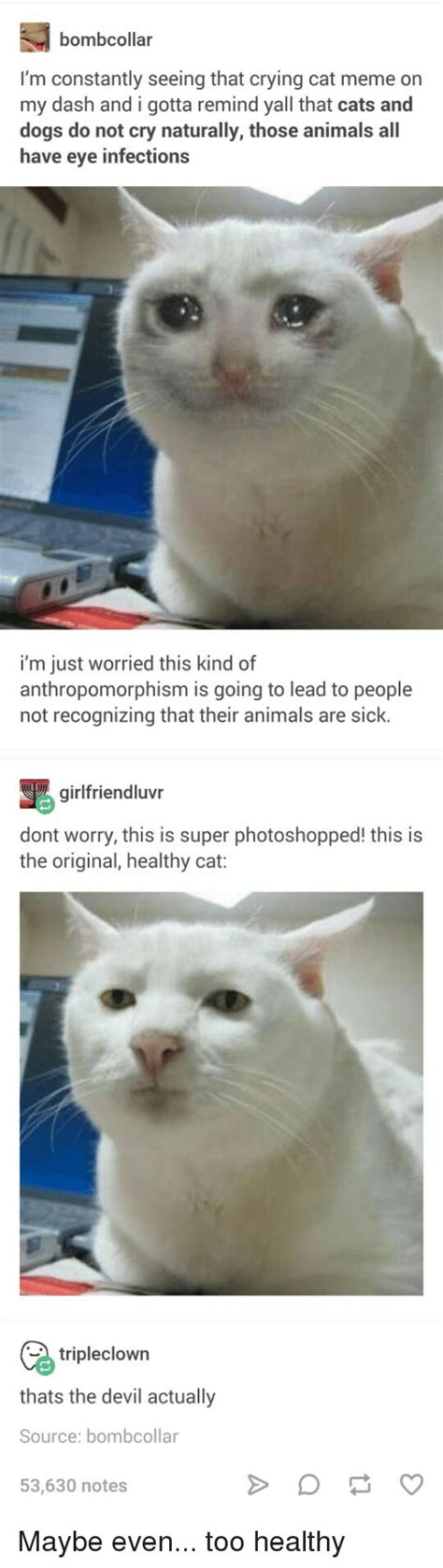 Crying Cat Memes Is The New Craze Among Catizens 30 Crying Cat