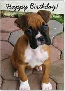Happy Birthday Boxer Dog Memes