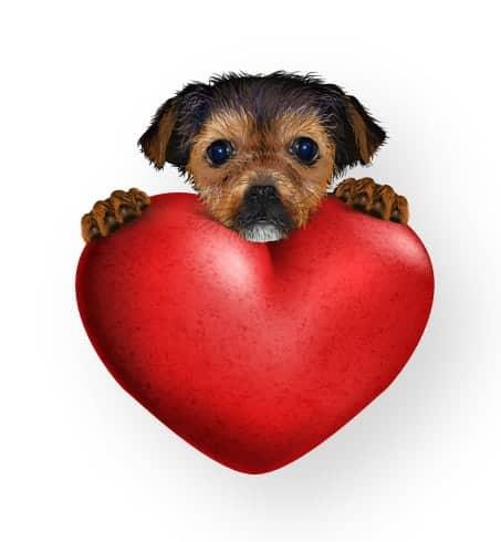 25 #best #valentine #puppy