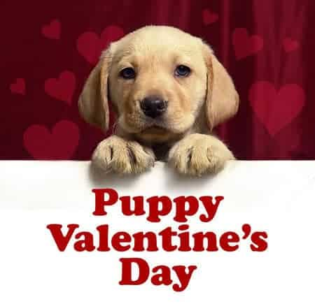 25 #best #valentine #puppy
