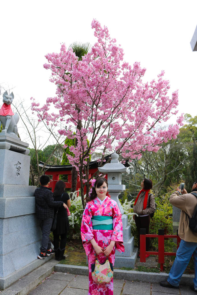 A girl wearing a kimono stands by a cherry blossom tree