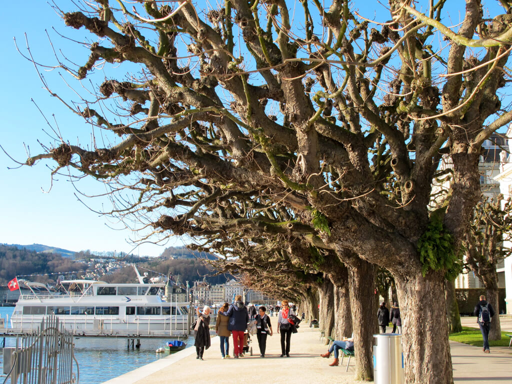 Unique trees at Lake Lucerne