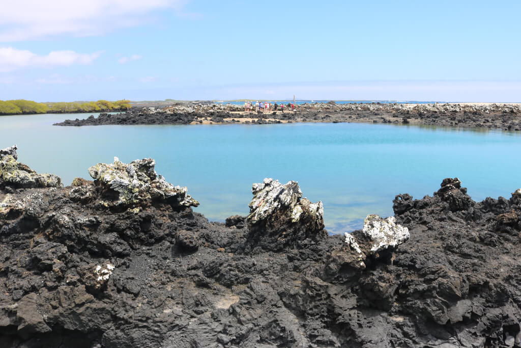 Las Tintoreras islets near Isabela in the Galapagos Islands