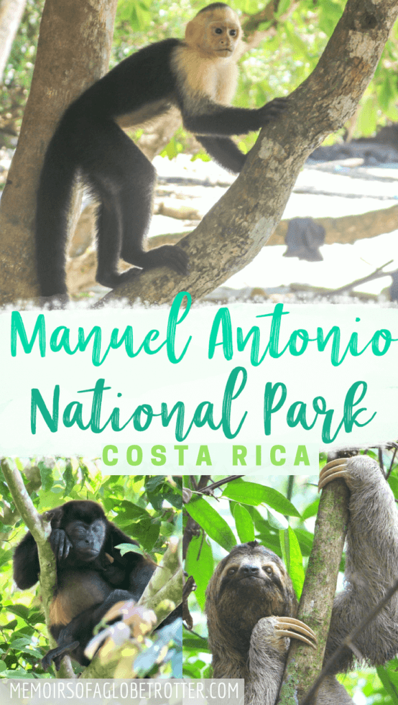 Taking a guided tour is the best way to see Manuel Antonio National Park in Costa Rica. Learn all about the animals in the park, when to visit and more in this post!