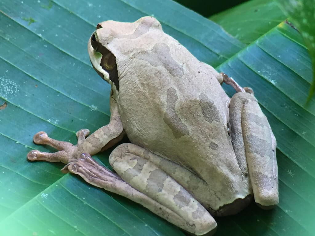 A frog as seen through a telescope