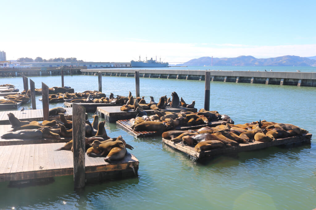 Sea lions lie on the docks at Pier 39 in San Francisco