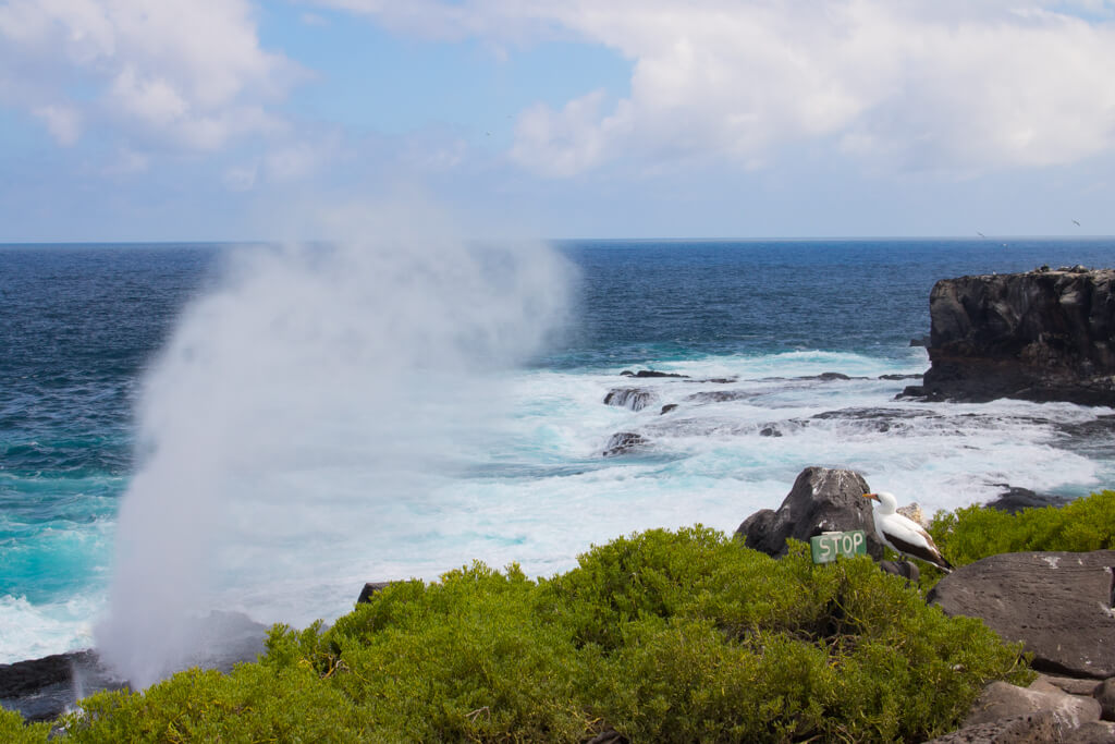 A blowhole on Española Island that shoots water into the air every few minutes