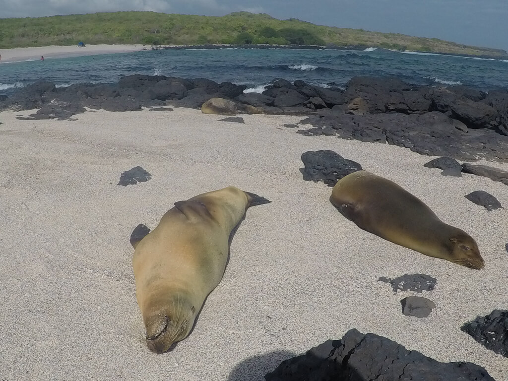 La Loberia is a beach near town on San Cristobal where you can spot sea lions and marine iguanas