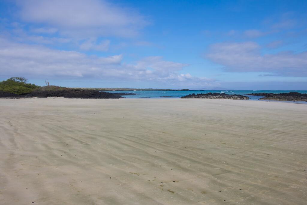 Playa El Garrapatero is a large beach on Santa Cruz Island in the Galapagos. You can bike there or take a taxi.