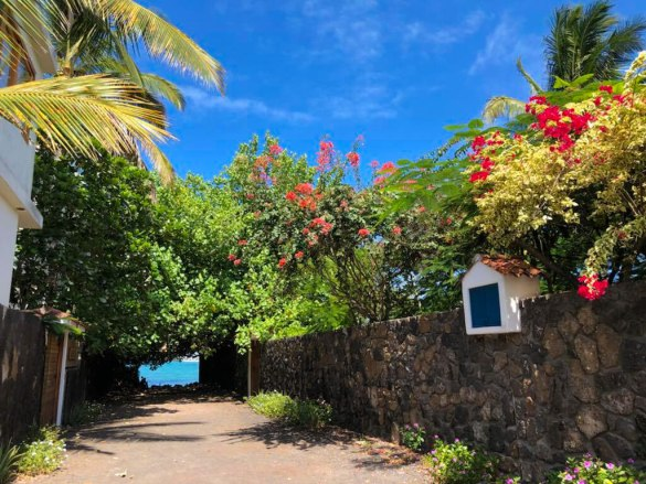 Walking around Puerto Ayora and looking at the colourful flowers is one of the best things to do on Santa Cruz Island in the Galapagos