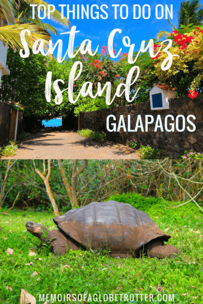 Puerto Ayora on Santa Cruz Island is an excellent place to stay during a land-based trip to the Galapagos. Watch giant tortoises at a ranch in the highlands, spot marine iguanas at Tortuga Bay or learn about the amazing animals of the Galapagos at the Charles Darwin Research Station