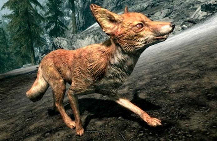 skyrim raposas