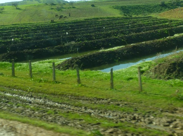 Lots of different agriculture can be seen from the train.
