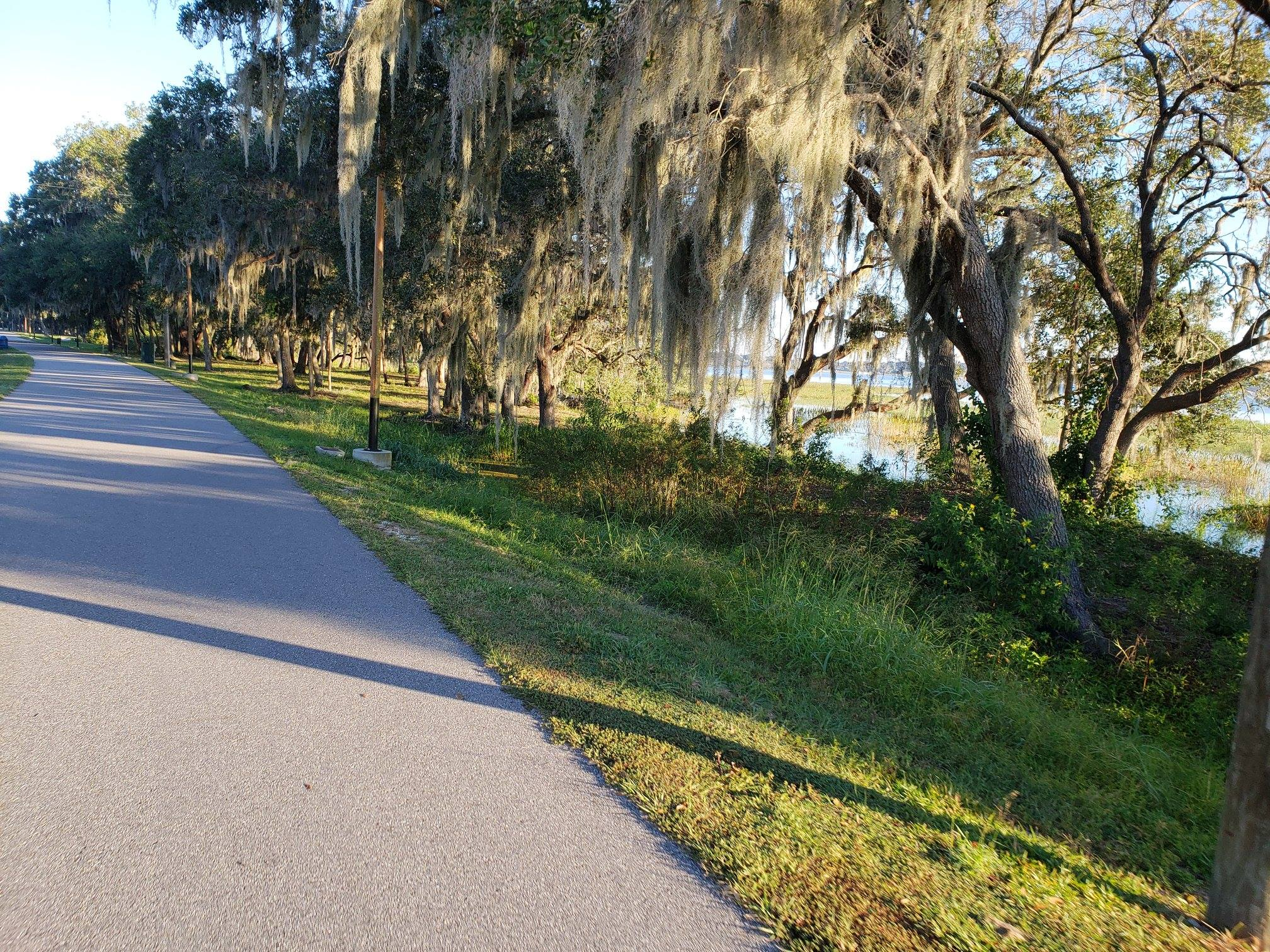 Looking down a paved trail with willow trees and water to the right