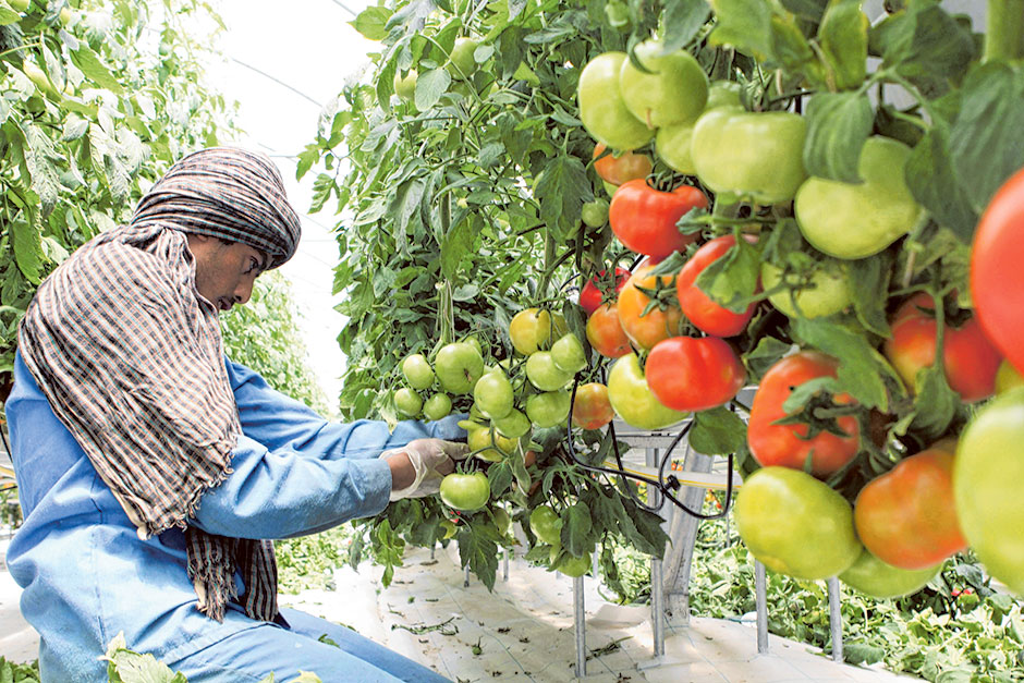 UAE banning all Fruit and Vegetable imports