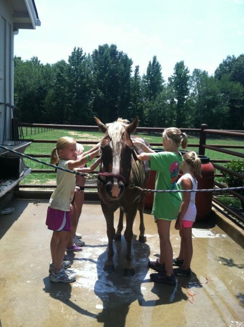 Pony Washing