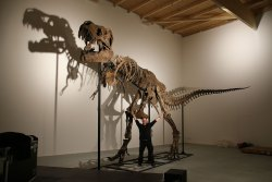 Imagination, education and unforgettable world's first encounter with a T. rex