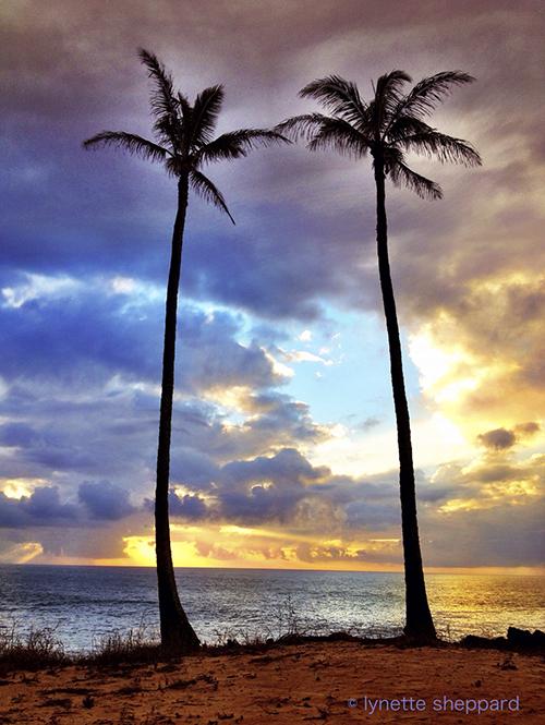 Go Coconuts This Holiday Season!