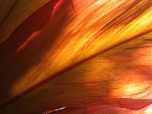 Flaming Ti © lynette sheppard