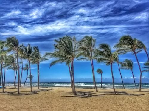 Paradise Palms © lynette sheppard
