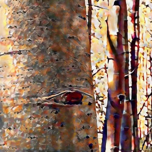 painted aspens 1 © lynette sheppard