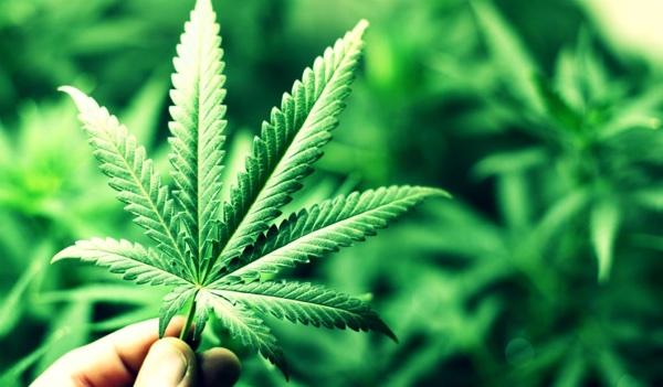 cannabis fertilidad
