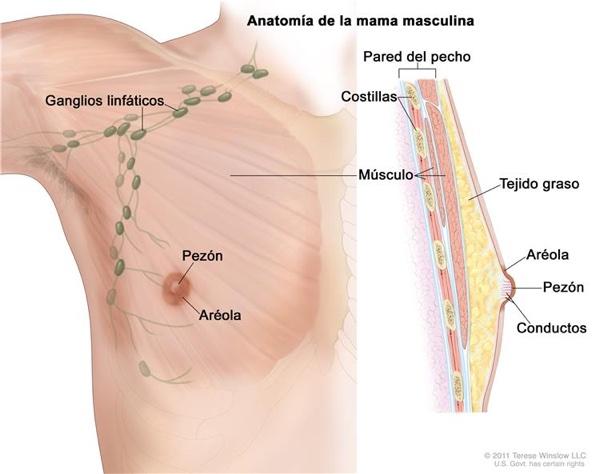 cáncer de mama en hombres