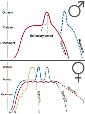 ¿Cuales son las fases de la respuesta sexual humana?