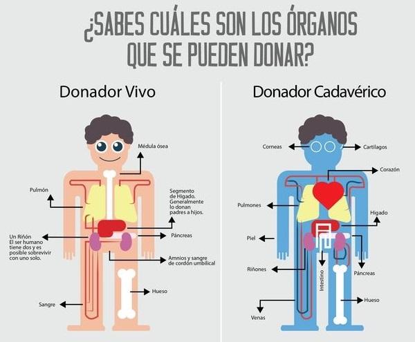 Hacerse donante de órganos a través del móvil